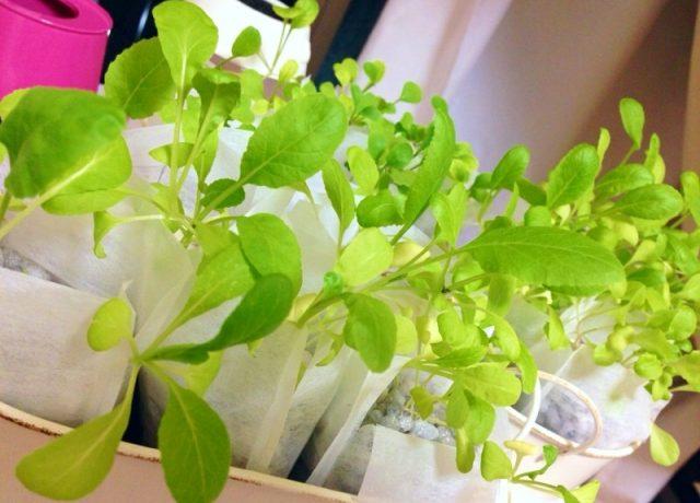 水耕栽培の自作法やキット・肥料の総まとめ!作れる野菜の ...