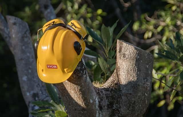 剪定された木と安全ヘルメット