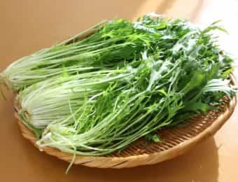 ザルに置かれた水菜