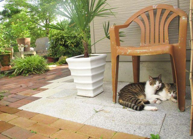 椅子の下でくつろぐ猫
