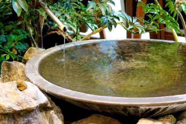 陶器製の睡蓮鉢