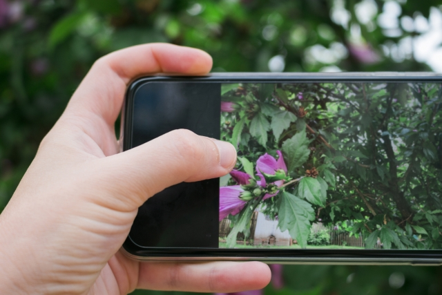 スマートフォンで植物を撮影する人