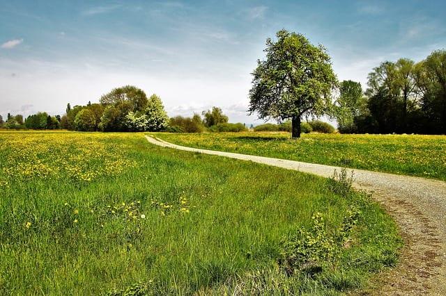芝生が広がる道