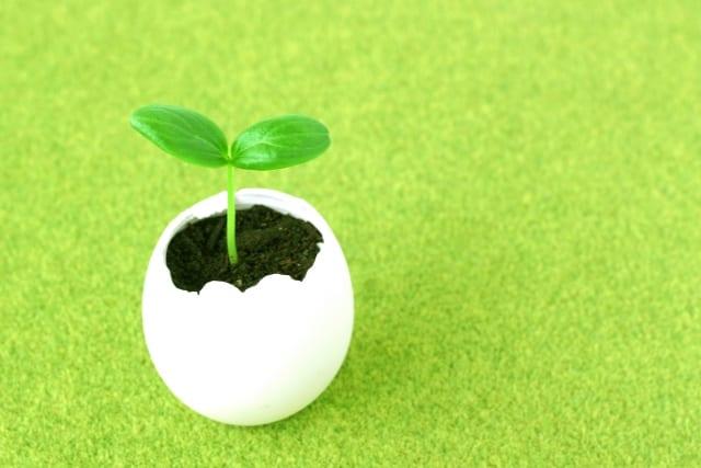 卵の殻の植木鉢から発芽した芽