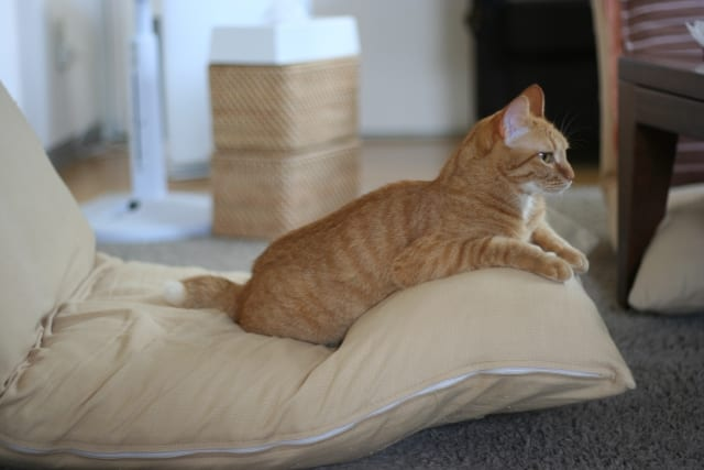 座椅子に座る猫