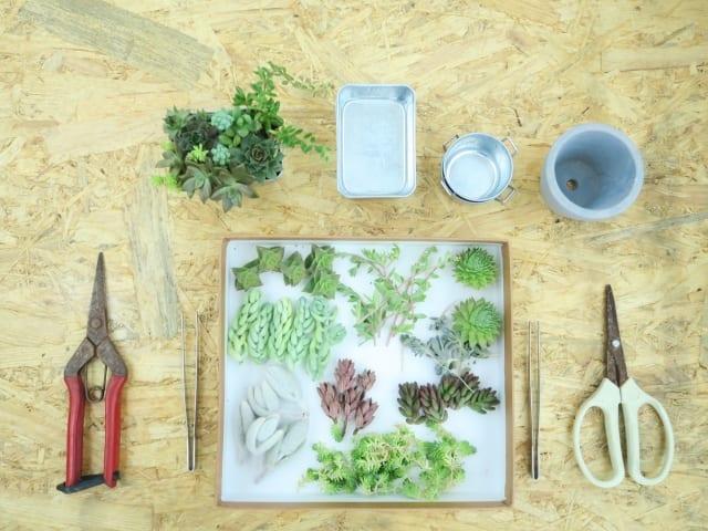 多肉植物の寄せ植えの材料