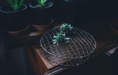 網の上に置かれた多肉植物