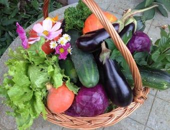 家庭菜園でたくさんの野菜を収穫しよう