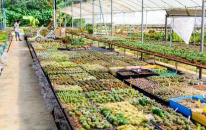 多肉植物の市場
