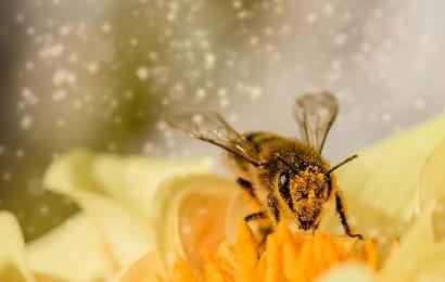 木酢液を蜂除けに