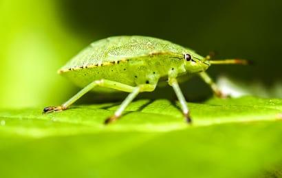 木酢液で害虫予防