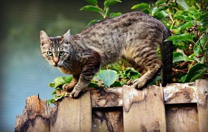 畑への猫糞の被害を防ぐ木酢液