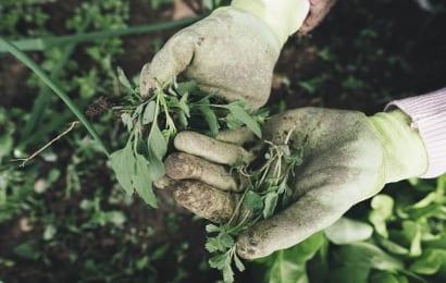 シロアリ駆除のために庭の雑草を取る