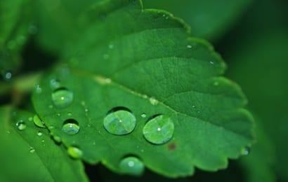 木酢液で植物を元気に