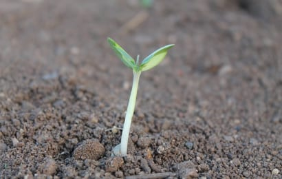 木酢液を使ったら土の中から元気な芽が