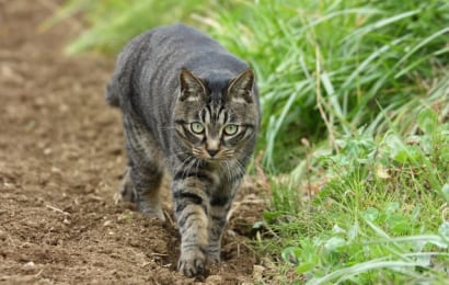竹酢液は猫除けにも効く