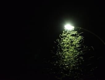 虫が光に引き寄せられるイメージ