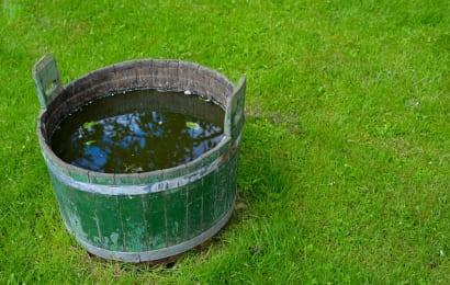 ピートモスは、バケツなどで水にしっかり浸す
