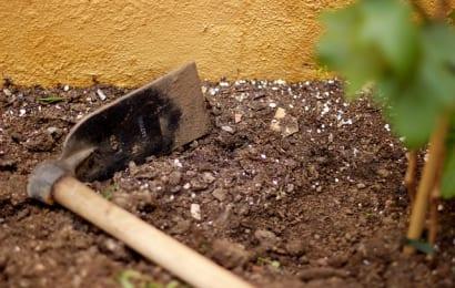 ぶどう栽培に使う桑