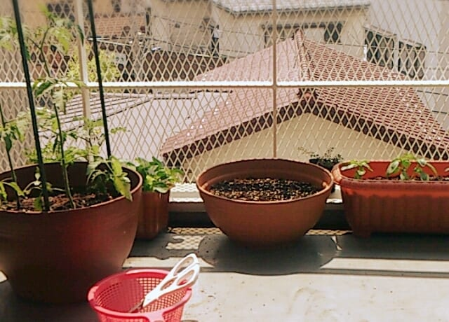 培養土を再生させるには、土を陽に当てる
