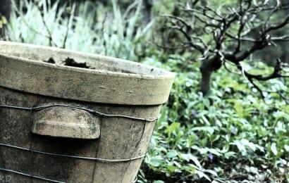ぶどう栽培しやすい鉢