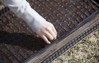 ピートモスは種まき用の土としても使える
