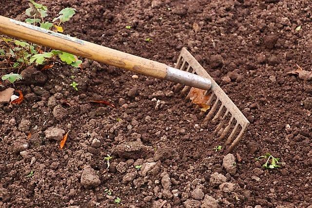 菊芋の栽培方法、植え付け時期など