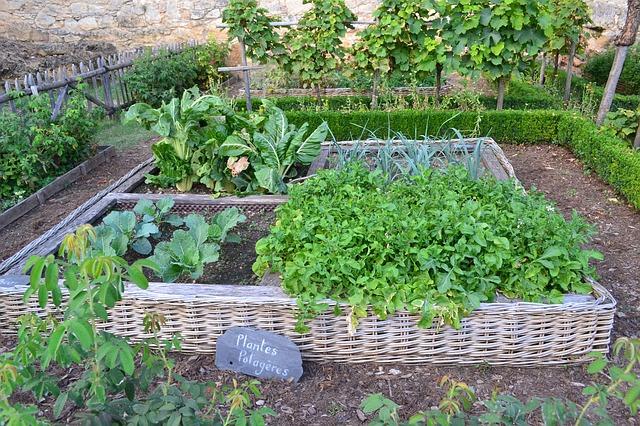 家庭菜園のポタジェガーデンの様子