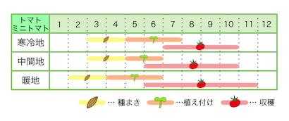 新規就農レッスン 栽培カレンダー トマト・ミニトマト