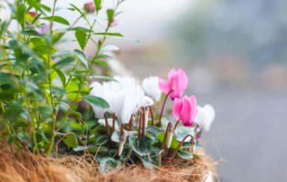 ガーデニングの際は、植物を観察する