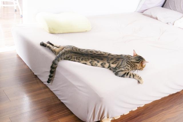 ベッドで伸びて寝る猫