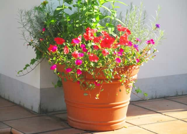 素焼き鉢に花や植物をたっぷり入れる