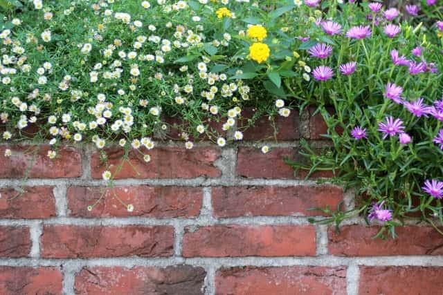 自分なりの庭を作ることがガーデニング