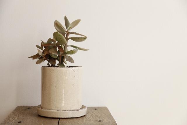 白の陶器のおしゃれな植木鉢