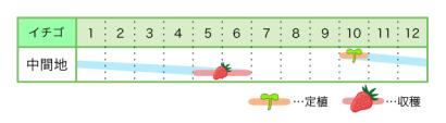 イチゴ 新規就農レッスン 栽培カレンダー