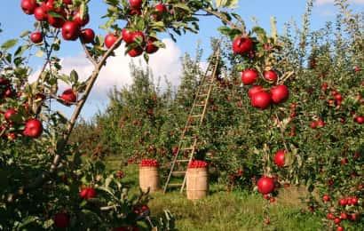 農作業シーン