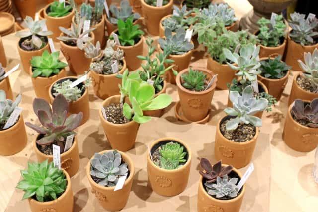 小さな陶器の植木鉢は100均などでも買える