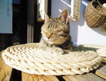 縁側でひなたぼっこする猫