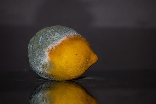 カビの生えたレモン