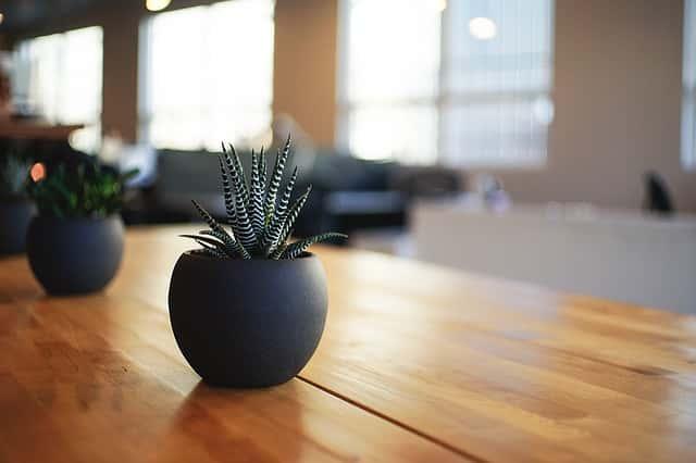 釉薬が塗られた陶器の植木鉢