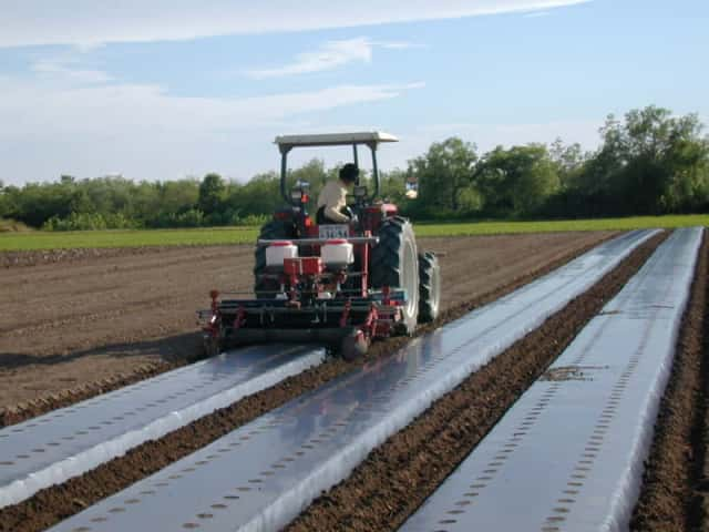 農機でマルチがけを行っているダイコン栽培