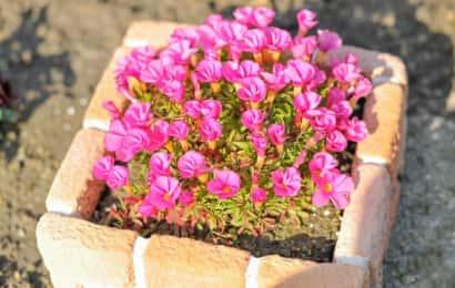 レンガの花壇の柵でピンクの花を囲う