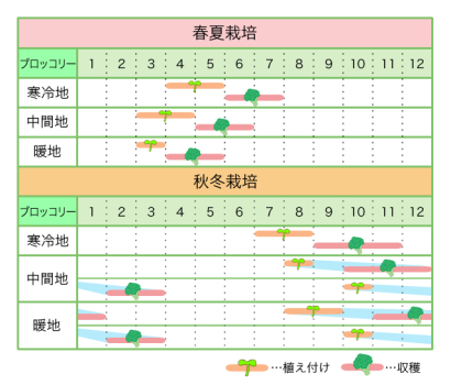 新規就農レッスン 栽培カレンダー ブロッコリー2