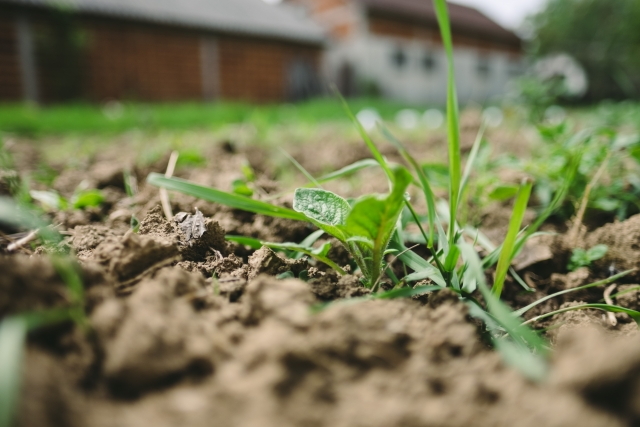 防草シートで雑草対策を