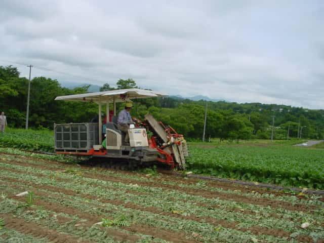 収穫機を使用した大根の収穫