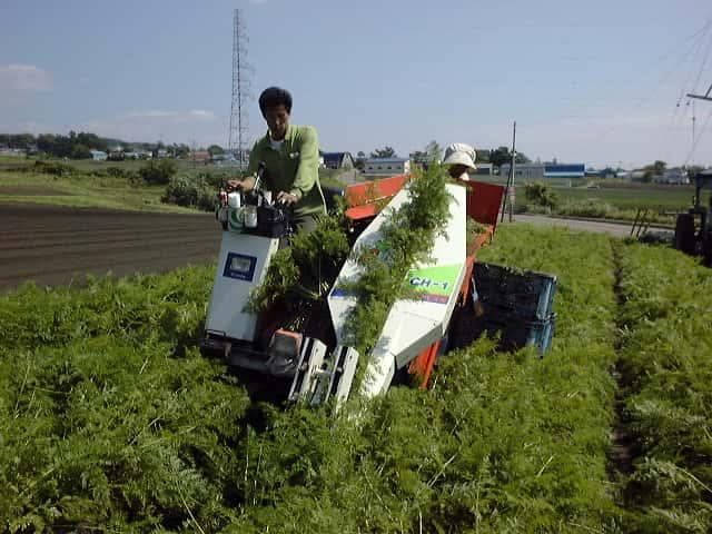 農機を使用したニンジンの収穫作業