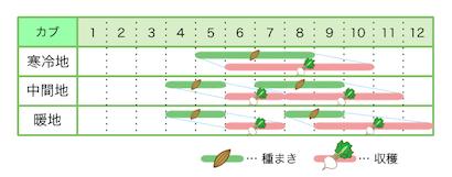 新規就農レッスン 栽培カレンダー カブ