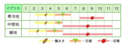 パプリカ 新規就農レッスン 栽培カレンダー