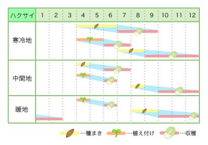 新規就農レッスン 栽培カレンダー ハクサイ