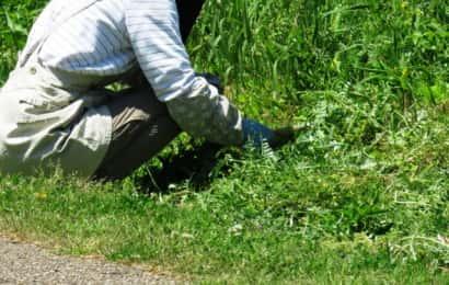 一人で雑草を取る